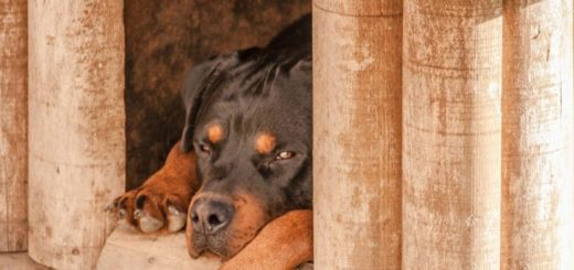 bouda pro psa