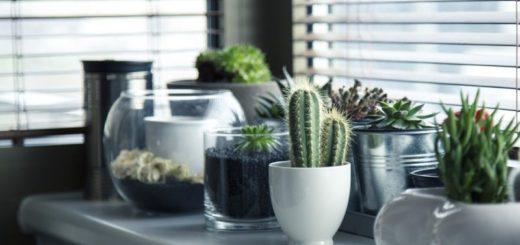 jak se starat o kaktusy