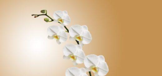 3 rady orchidej