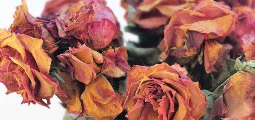 dostali jste růži