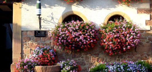 květiny na okno