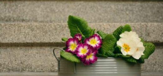 Aké kvety rozžiaria dom než začne jar?