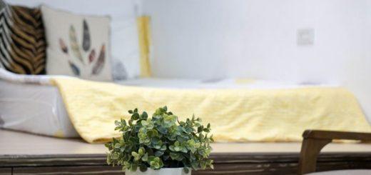 Izbové rastliny do spálne, ktoré perfektne prečistí vzduch