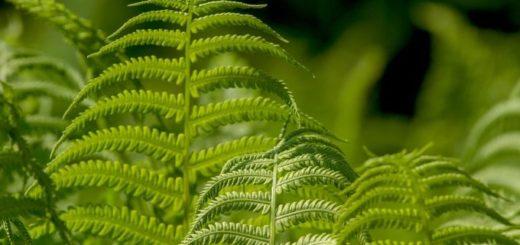 Štyri izbové rastliny, ktorým sa skvele darí aj v tieni