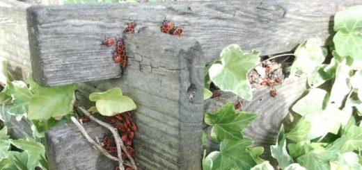 Máte na záhrade kompostér? A viete, čo do neho patrí a čo nie?