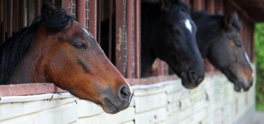 Ranch Nevada - westernová jazda na koňoch
