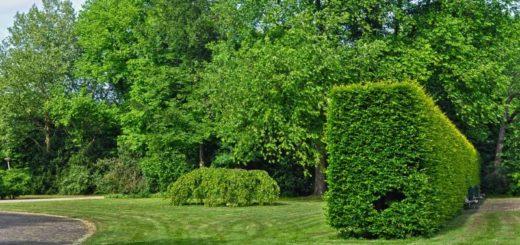 Živý plot ako lemovanie záhrady. Aký si vybrať?