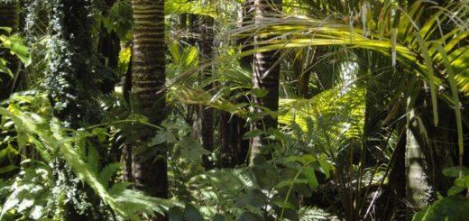 Ako môžeme pomôcť Amazonskému pralesu?