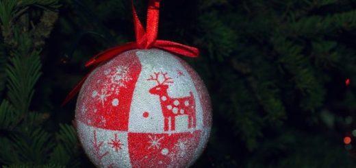 Čo s vianočným stromčekom? Nechať v kvetináči alebo radšej zasadiť?