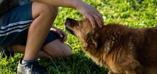 Aký pes je pre vás vhodný? Poradí váš horoskop